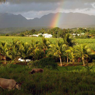 Guadeloupe. Exotisches Ensemble